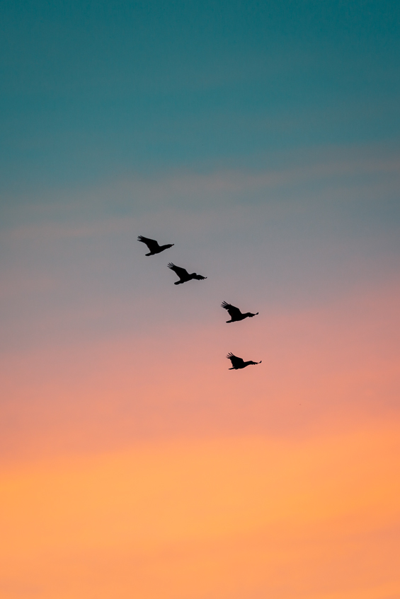 Birds in the evening